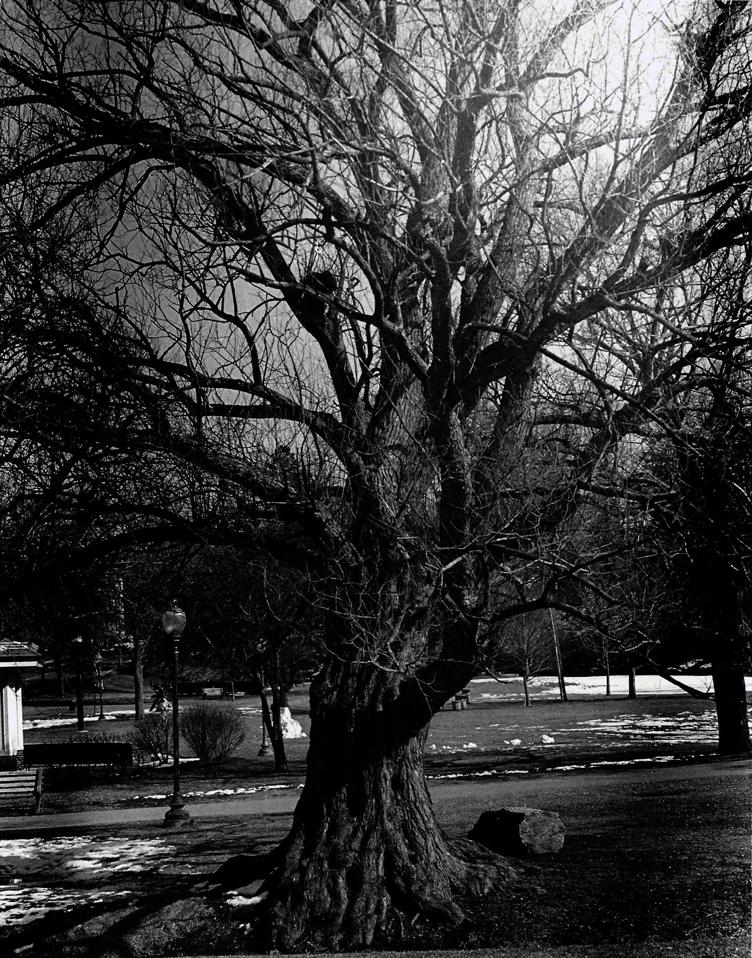 2012P Tree 1.jpg
