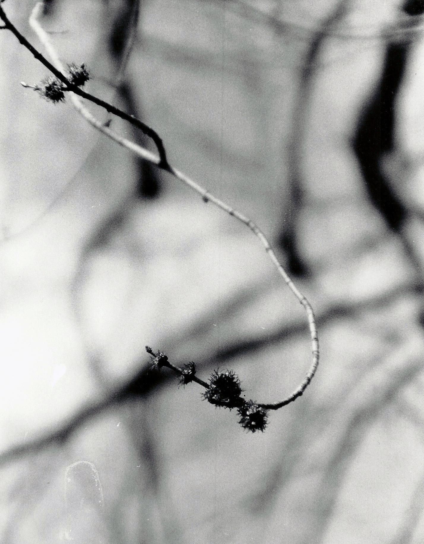 2012P Stick.jpg