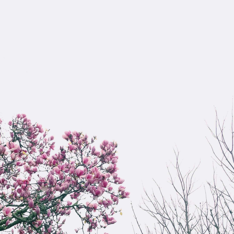 auckland_fine_art_photography5.jpg