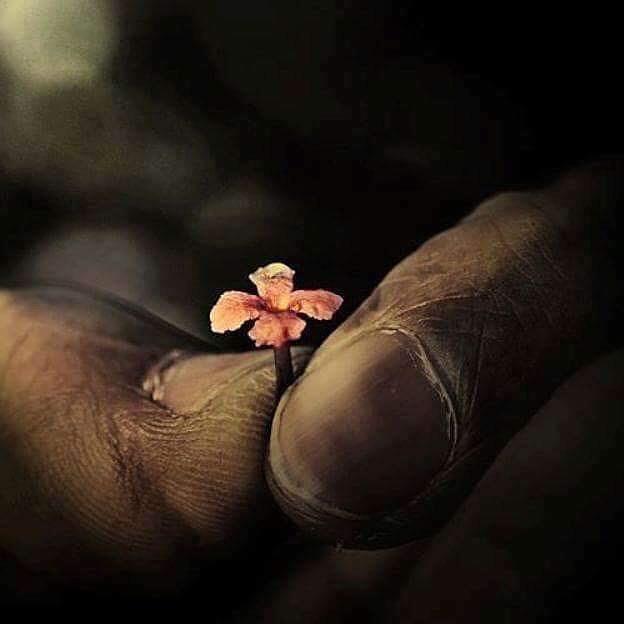 hand_flower.jpg