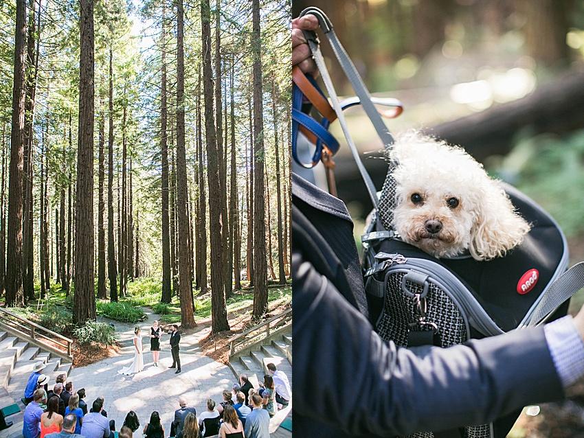 BerkeleyWeddingPhotography_SeattleWeddingPhotographer_0851.jpg