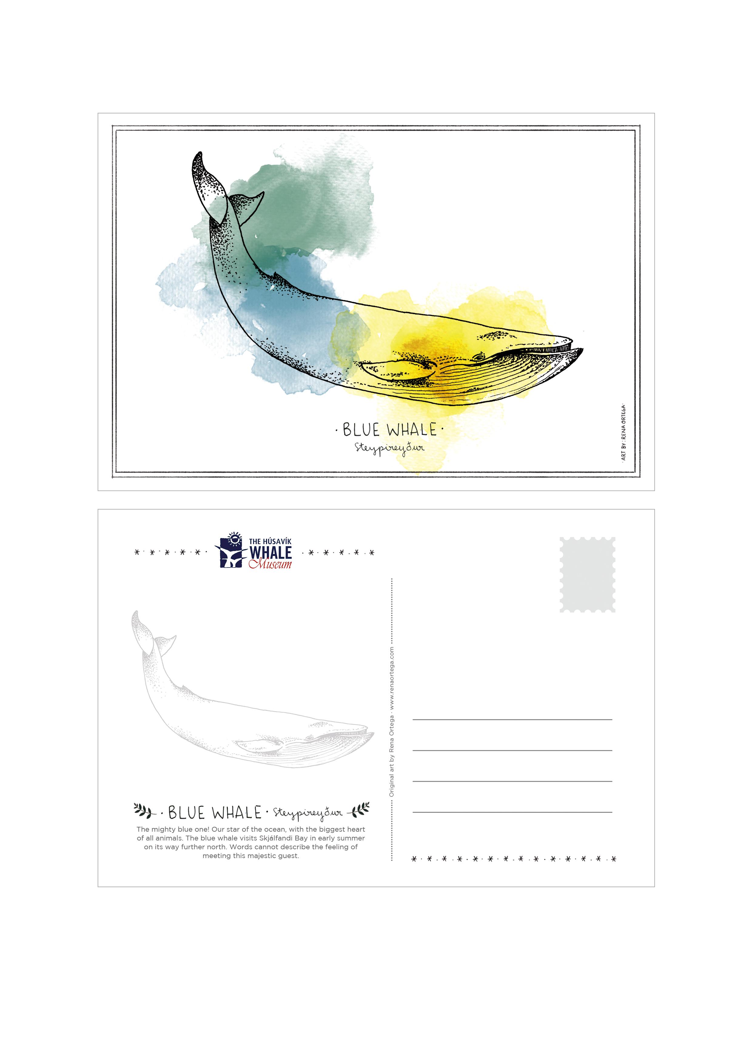 postcard_bluewhale.jpg