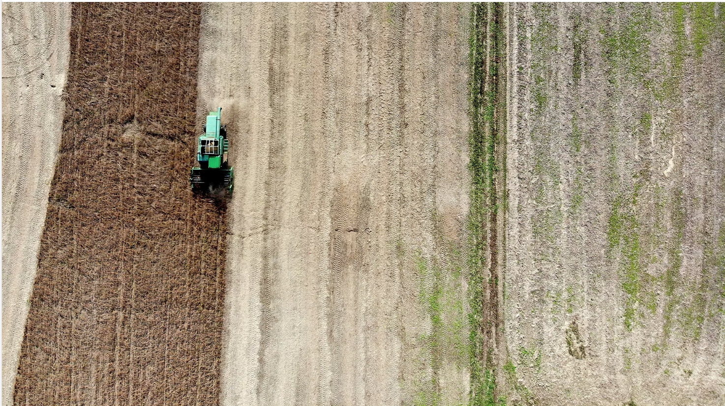 Soy farming in Owings, Maryland, which sells its crop to U.S. chicken farmers. Photo: Mark Wilson/Getty