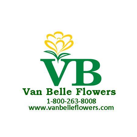 Van Belle logo Dec 4 2015.jpg