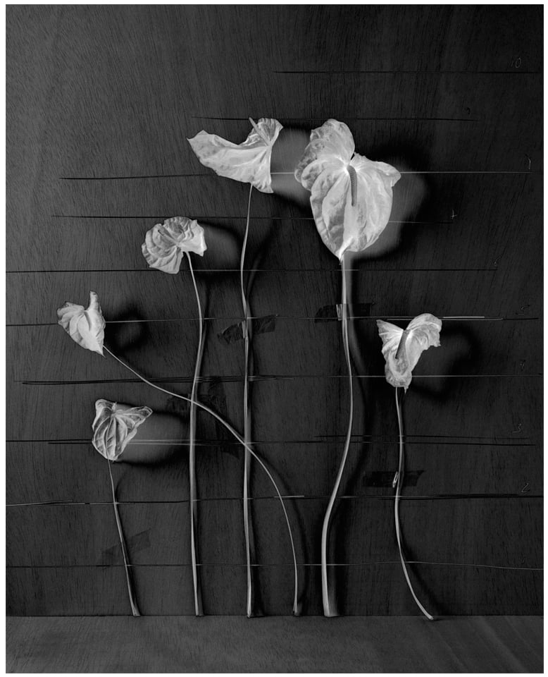 Escala Floral / Floral Scale