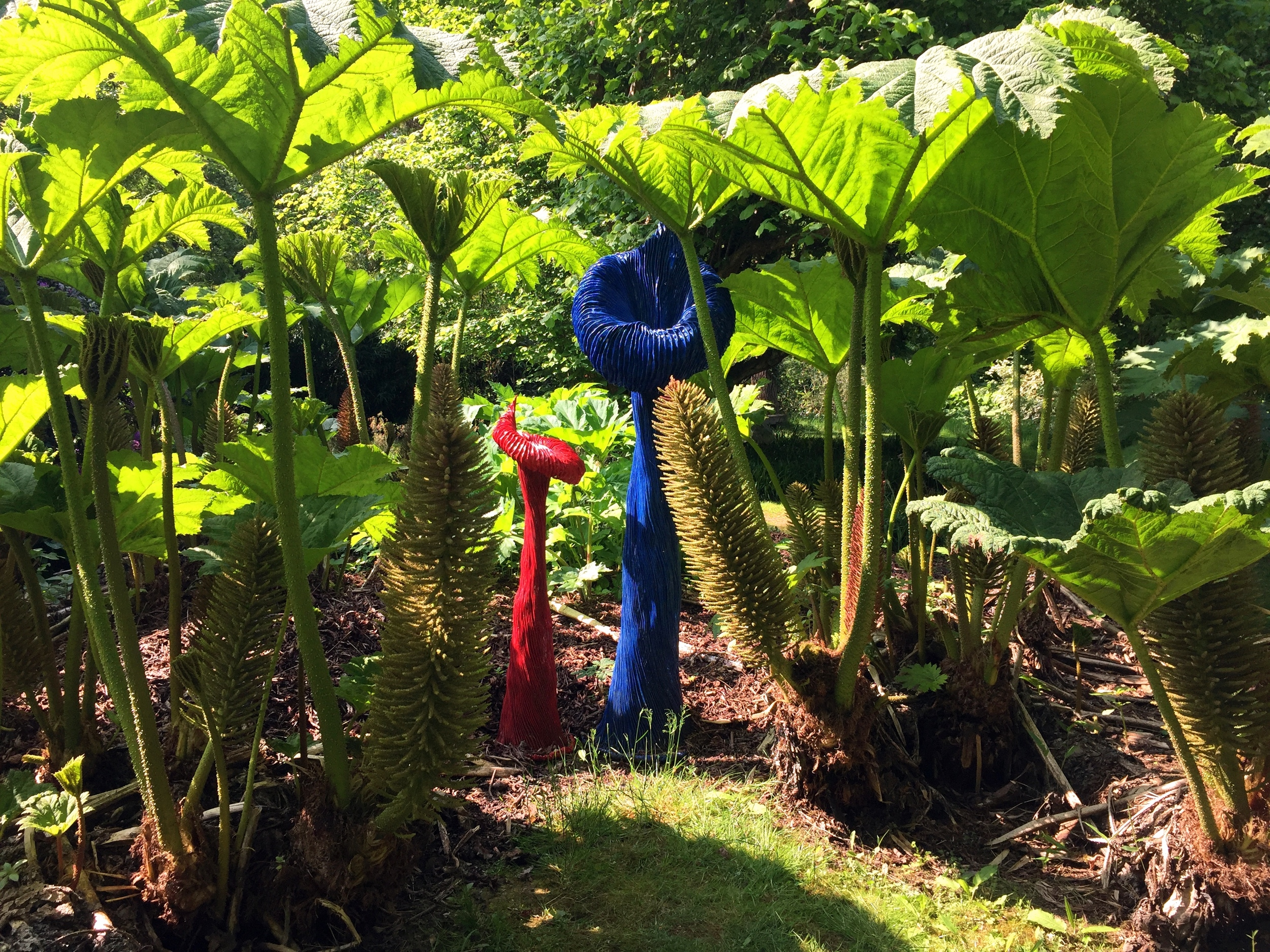 'Villosa' by Carole Andrews, in the Gunnera Manicata,.jpg