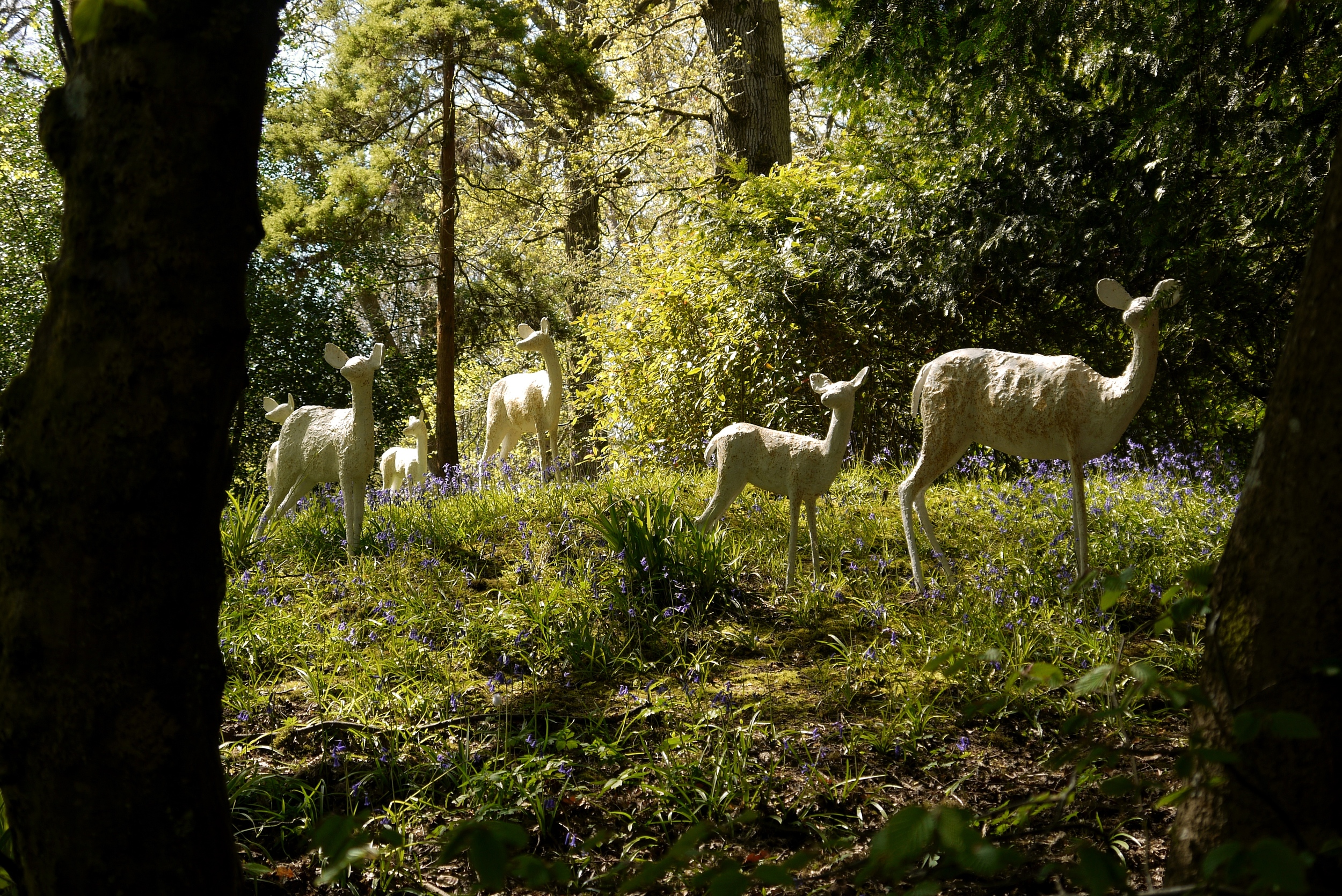 'White Deer' Alison Berman - through trees..jpg