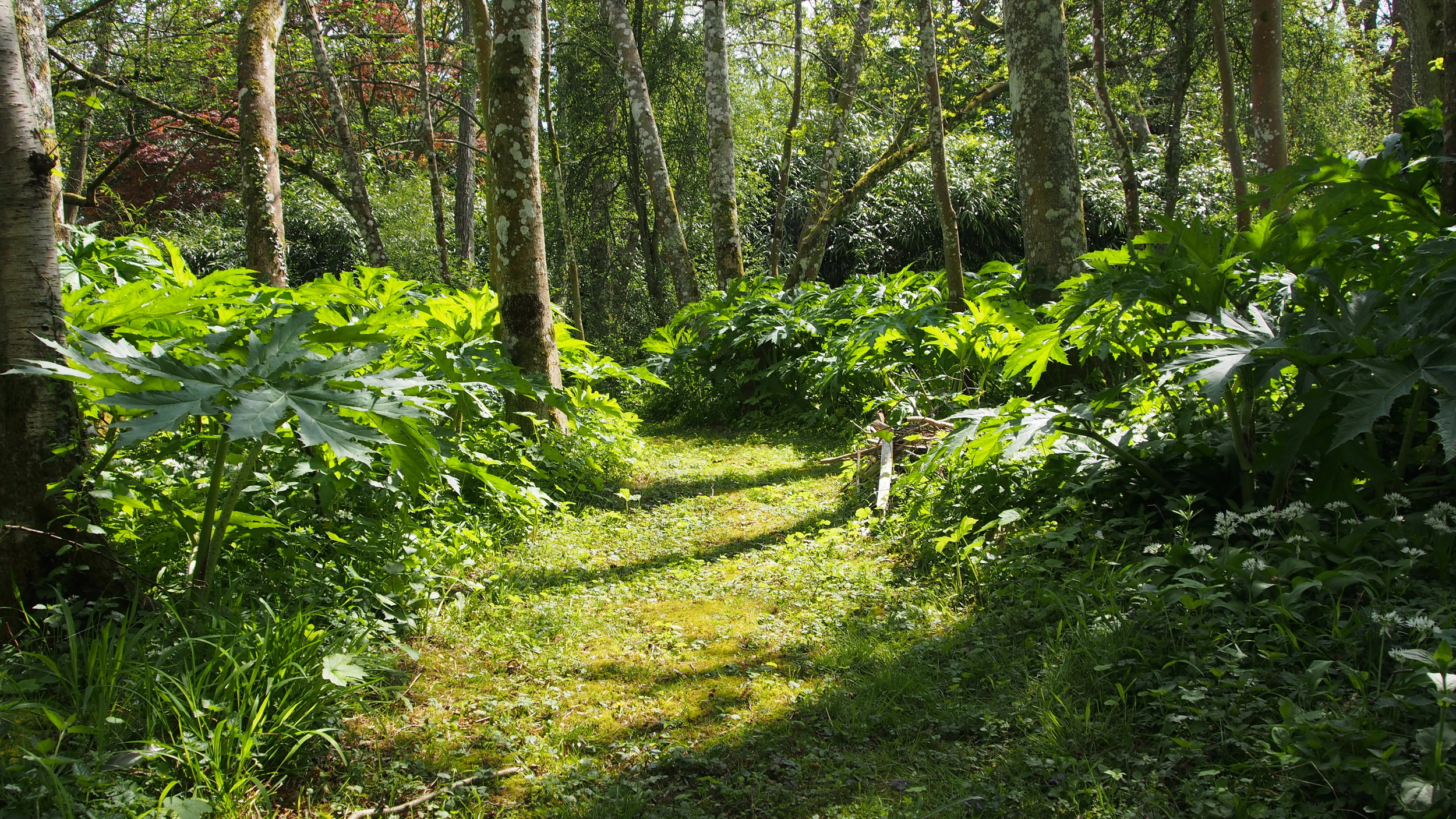 Winding paths allow nature to evolve in the garden