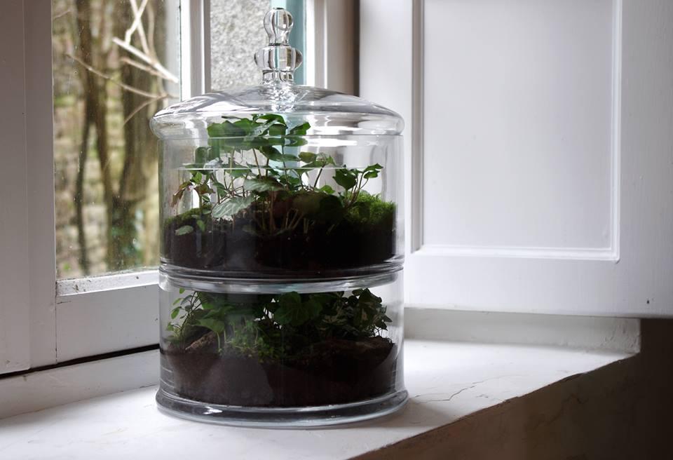 succulentes-design-green-monsters