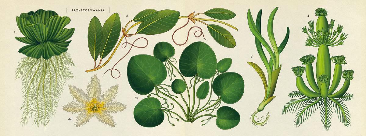 Botanicum-Katie-Scott-greenmonsters