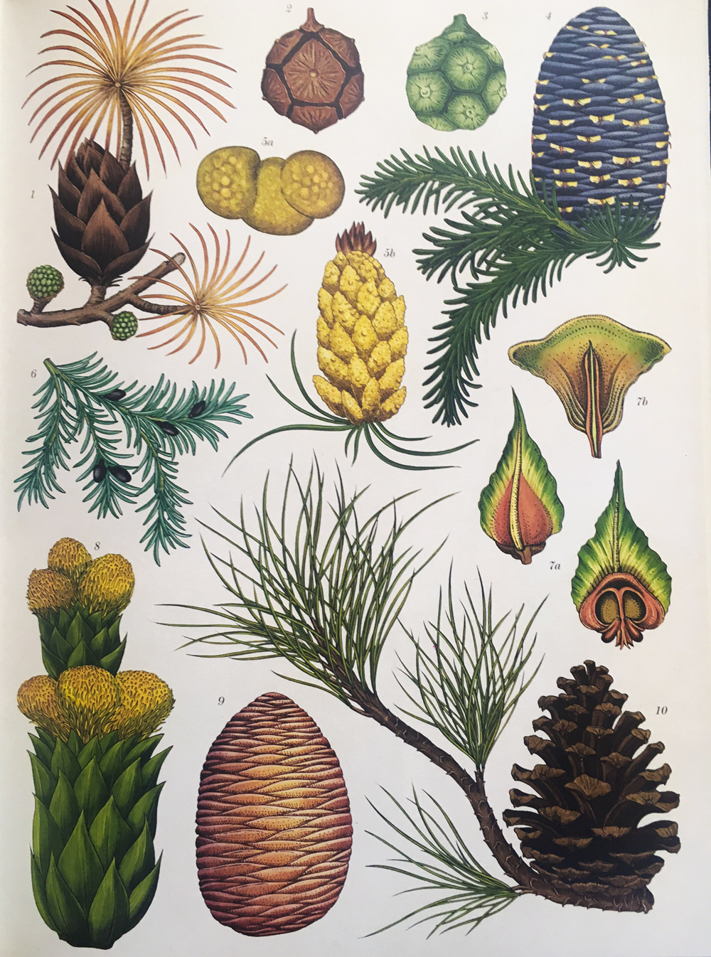 green-monsters-botanicum-trees-2