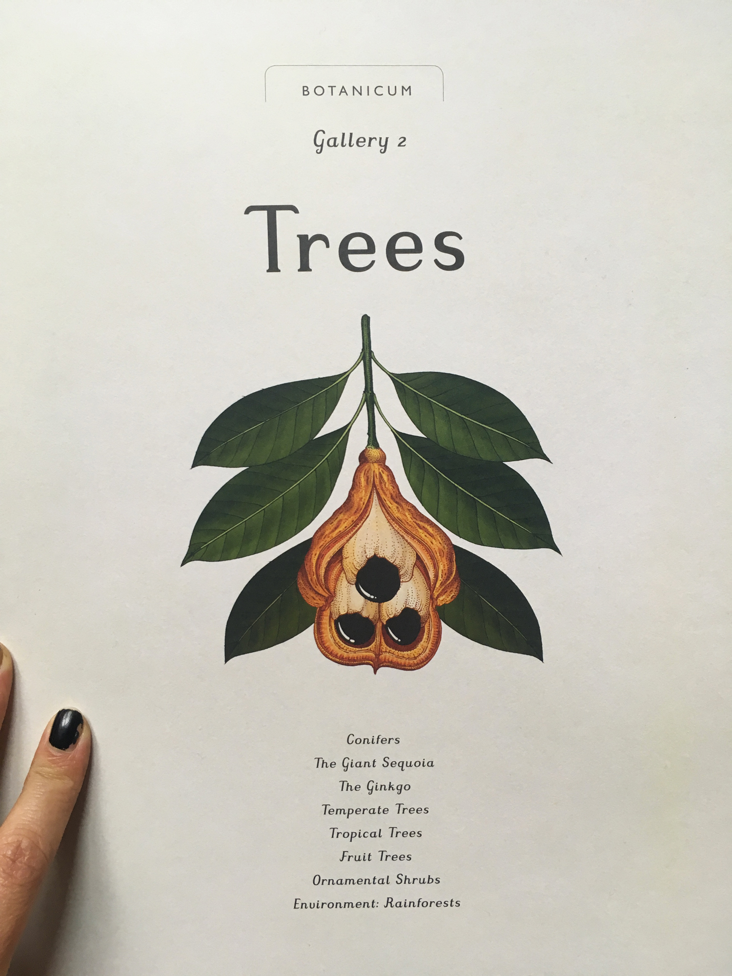 green-monsters-botanicum-trees3