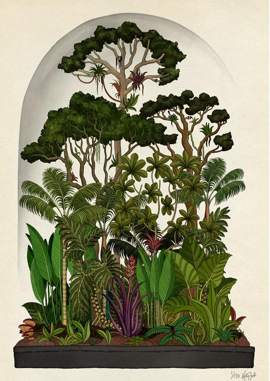 CH.2 Trees. Rainforest