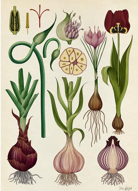 Green-monsters-botanicum-Bulbs.jpg