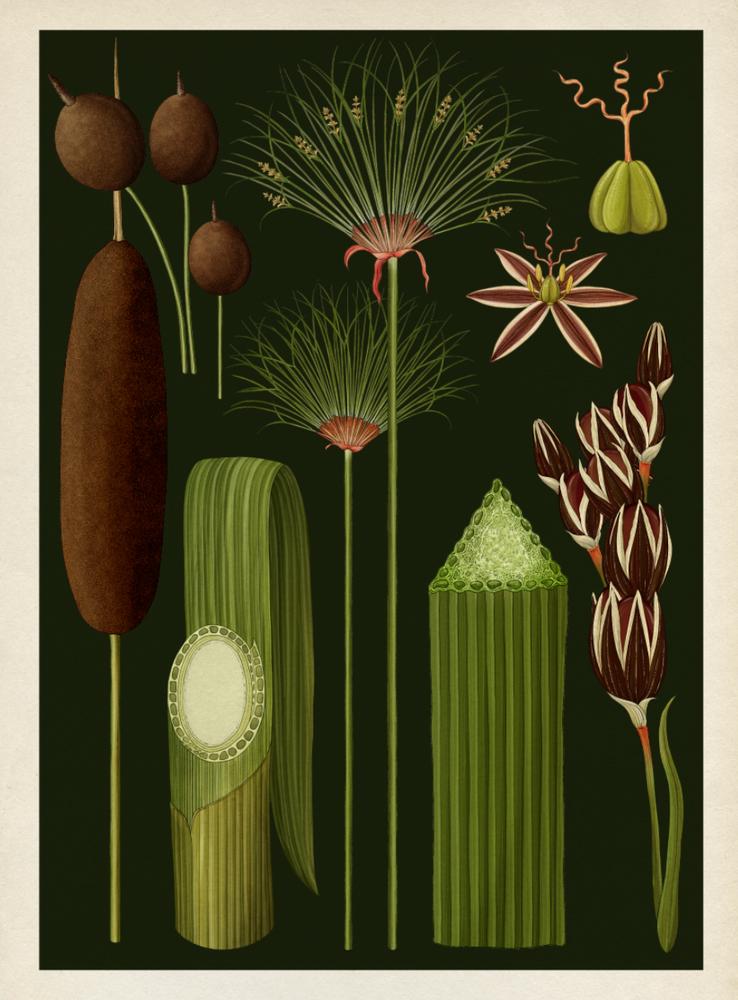 CH.5 Grasses, Cattails, Sedges & Rushes