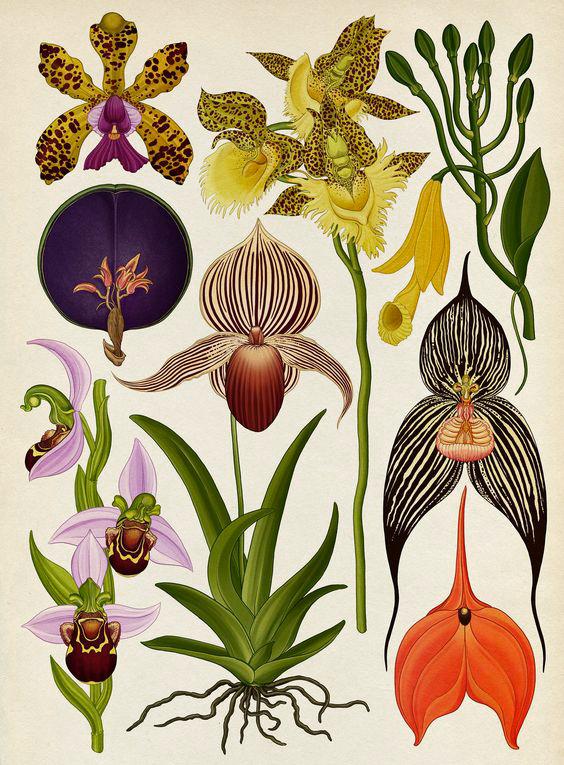 Green-Monsters-Botanicum-Orchids