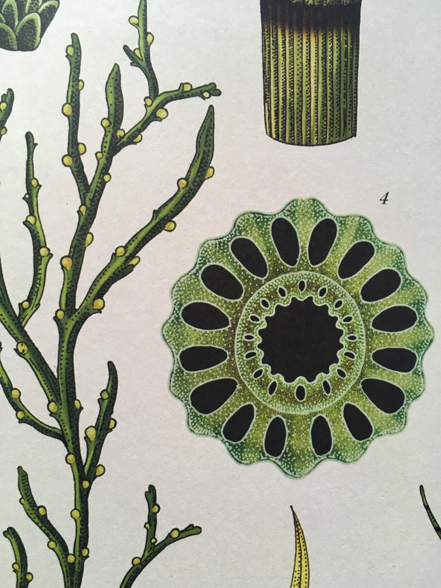 green-monsters-botanicum-9