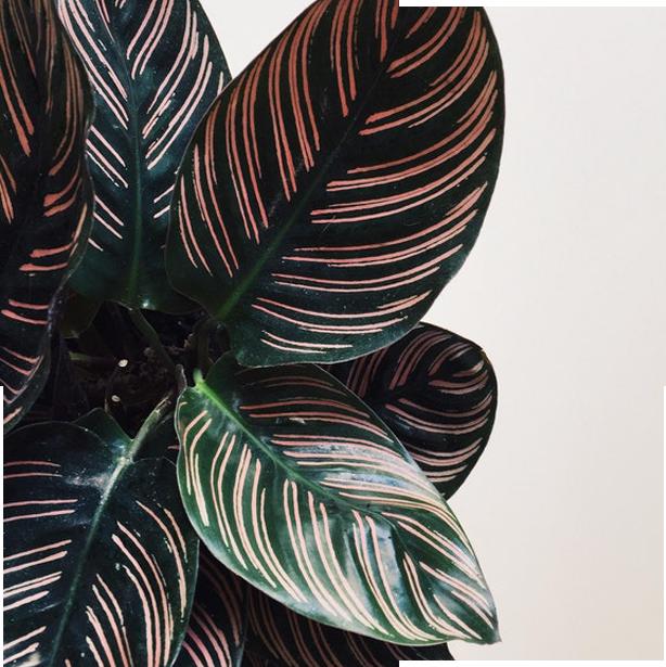 fleurs de caractère& plantescurieuses -