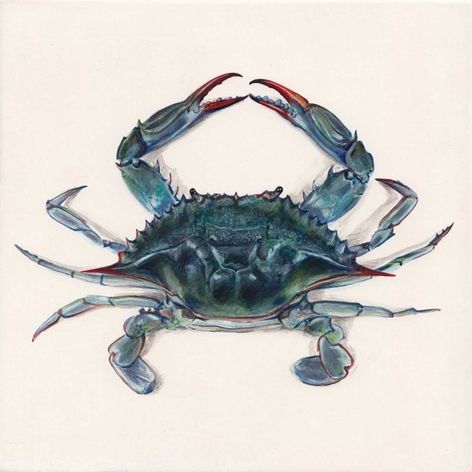 softshell_crab.jpg