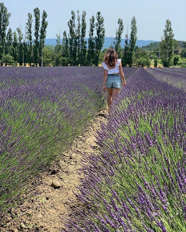 #lavenderfieldsforever 💜 #gordeseous