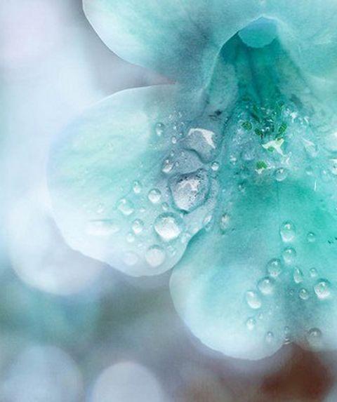 lovelyreveries.blogspot.com.jpg