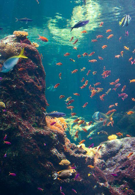 flickr.com.jpg