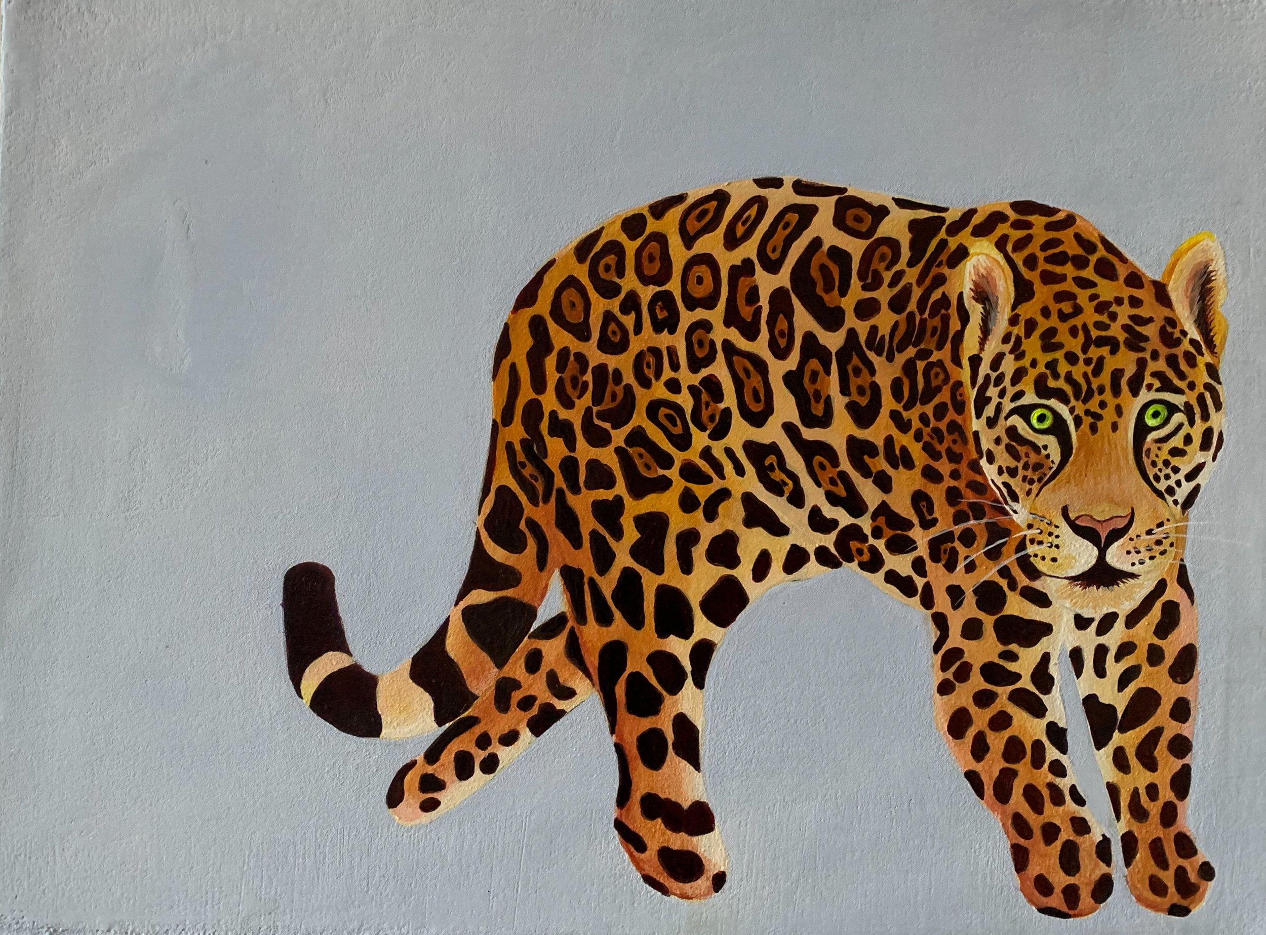 Jaguar 3.jpg