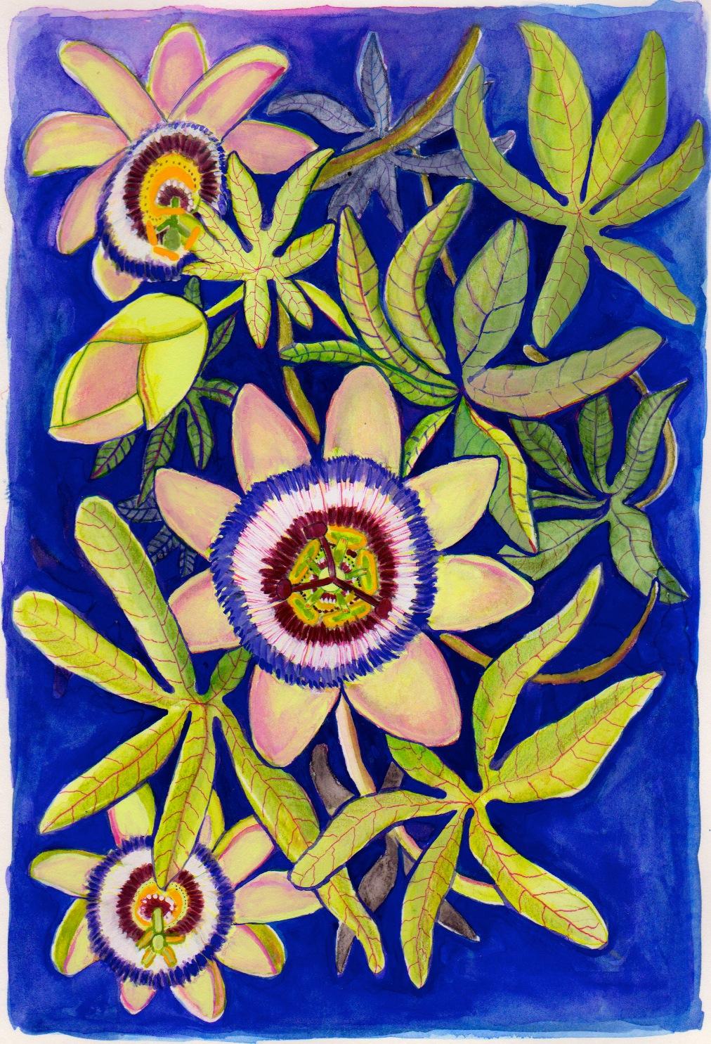PASSION FLOWER.AMVelasco.jpg