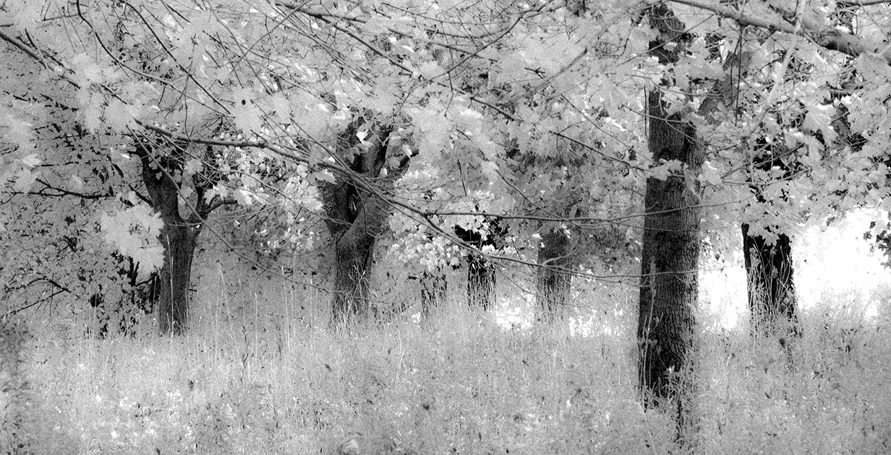Waterloo county landscape photo by Susan Arness