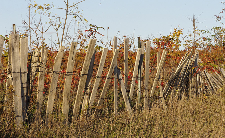 Waterloo county fall landscape photo by Susan Arness