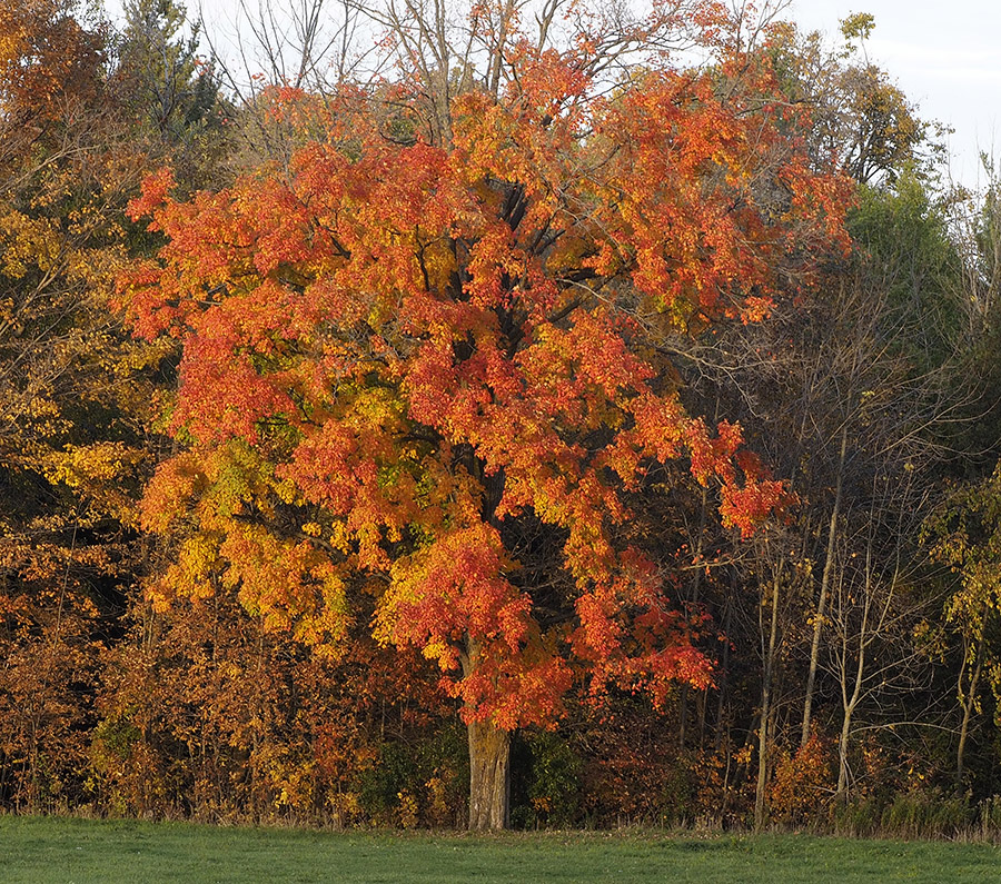 Waterloo county fall landscape photo by Susan Arness