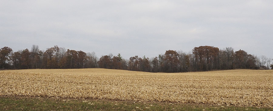 Cambridge Ontario fall landscape photo by Susan Arness