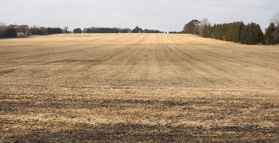 _B147979 Roseville field resized.jpg