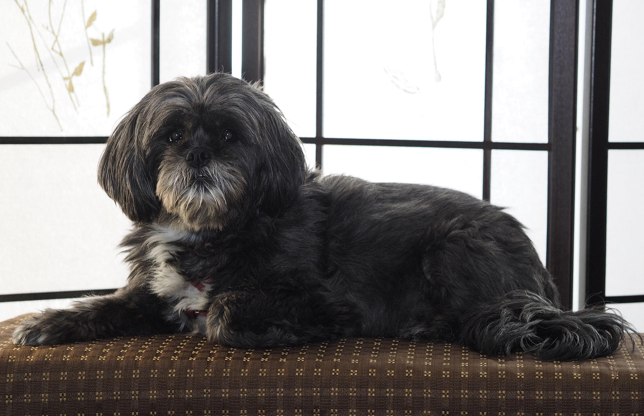 Dog photography pose