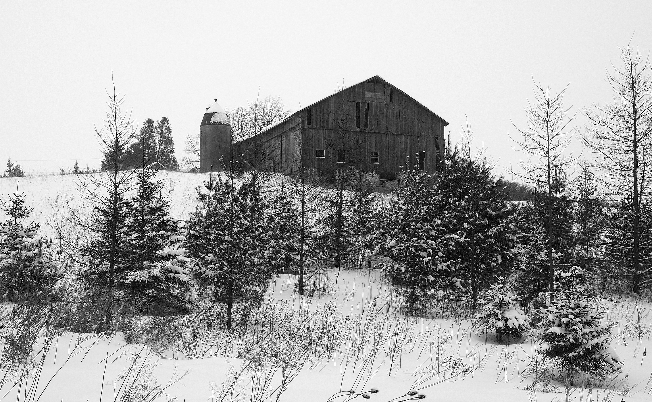 black and white photography by Susan Arness