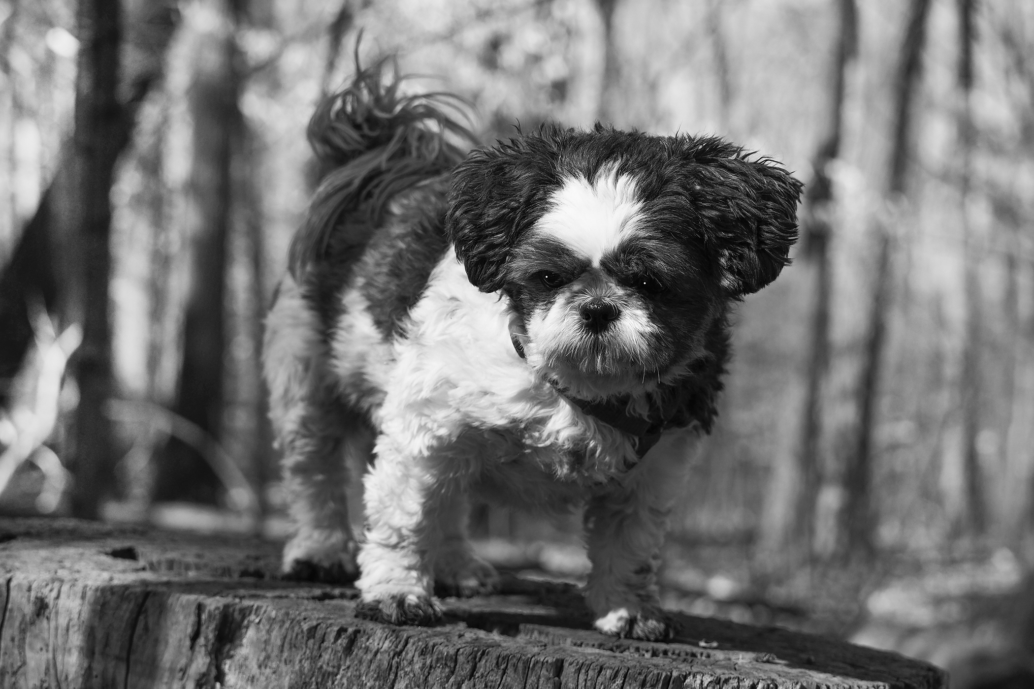 Dog Photography by Susan Arness