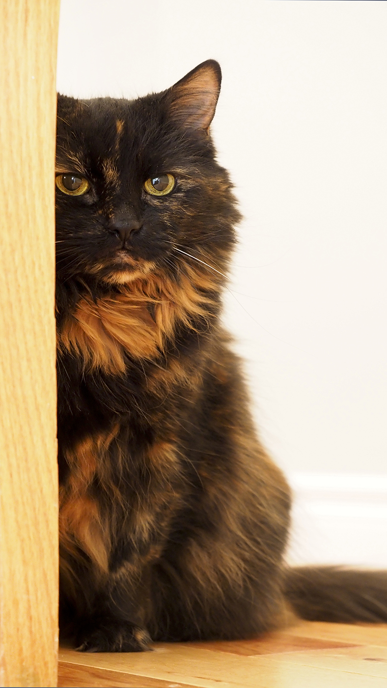 Cat Photography by Susan Arness