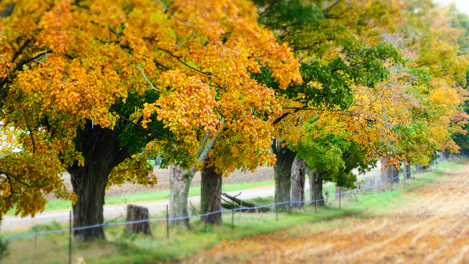 Waterloo Region Fall Image by susan Arness