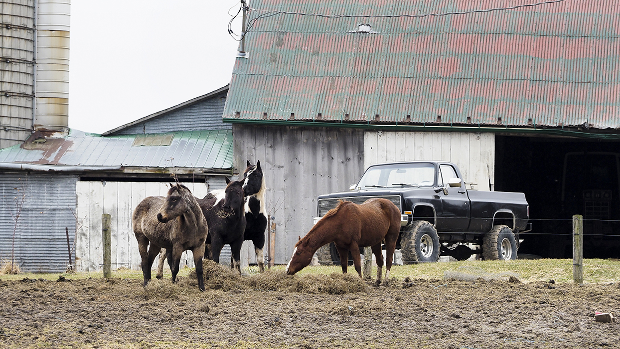 rural Waterloo region horses on the farm