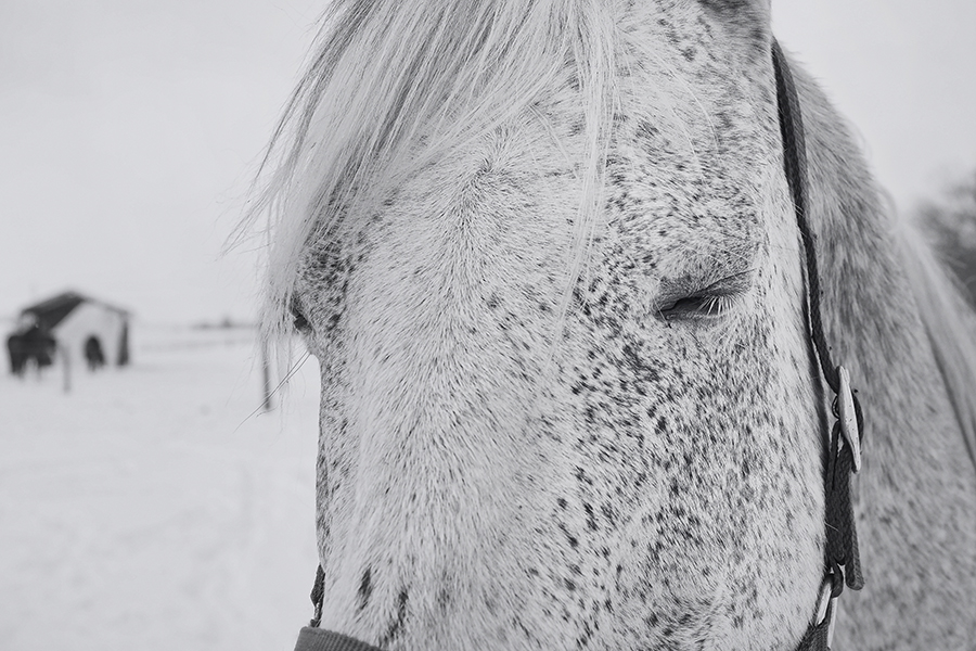 horse photography by susan arness