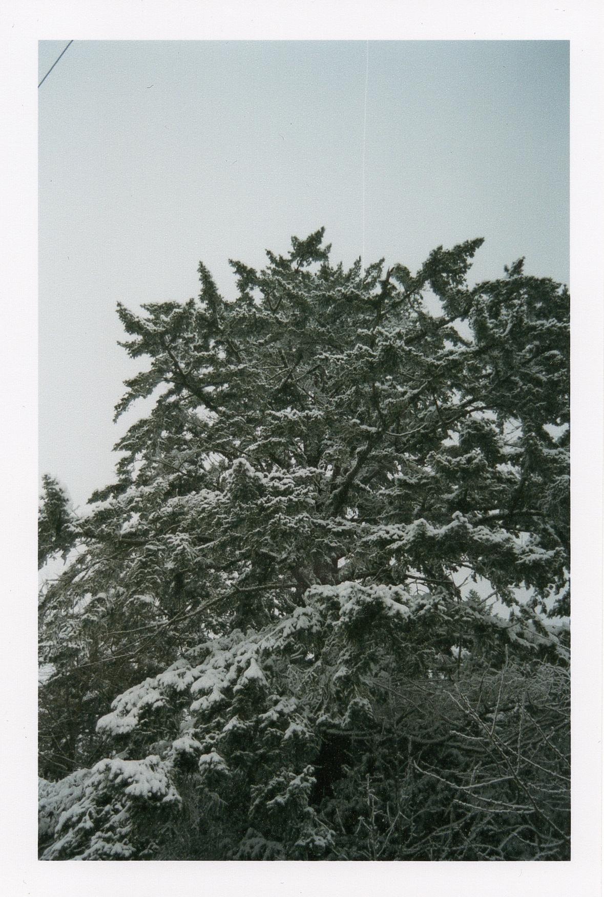 winterfilm-5.jpg