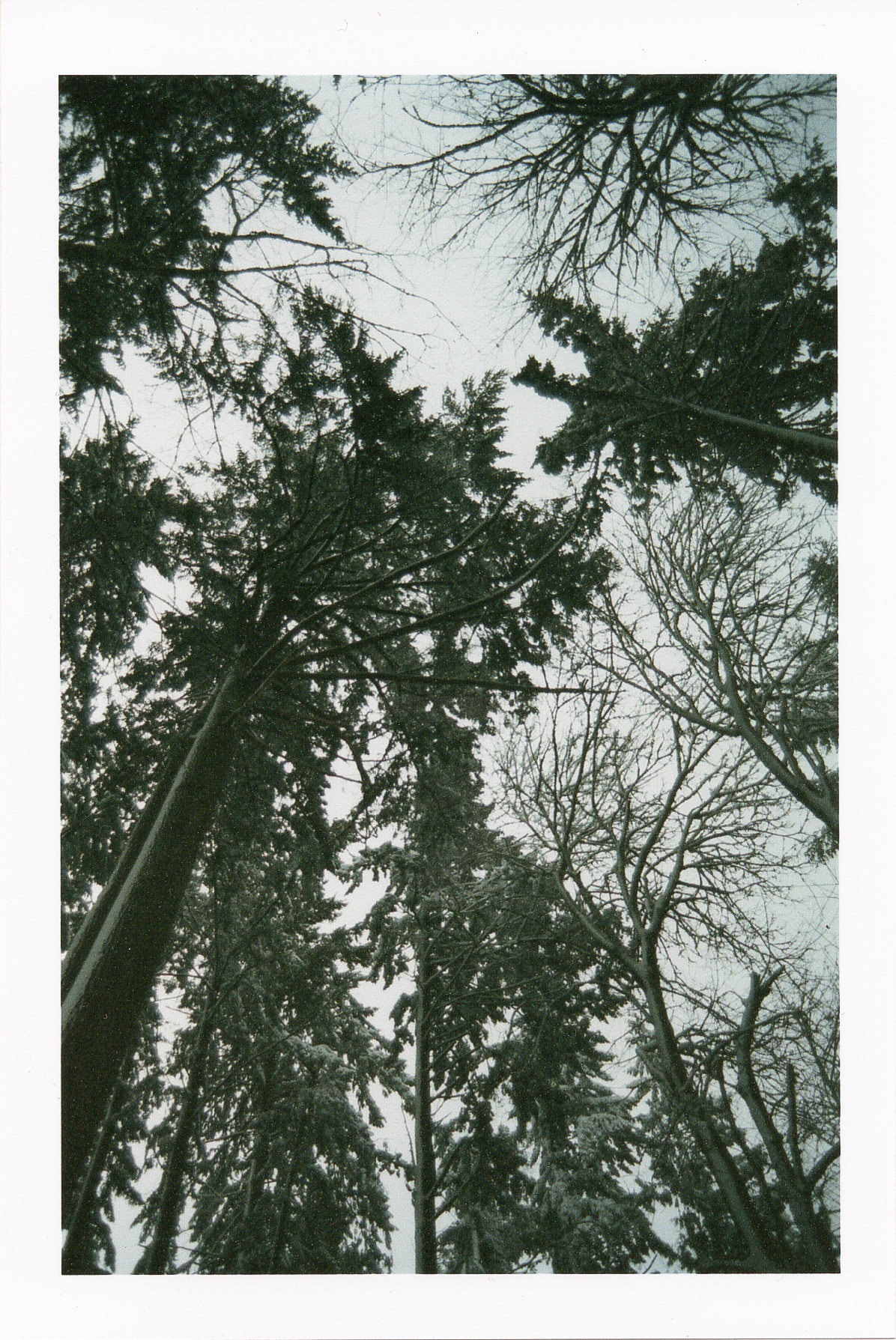 winterfilm-3.jpg