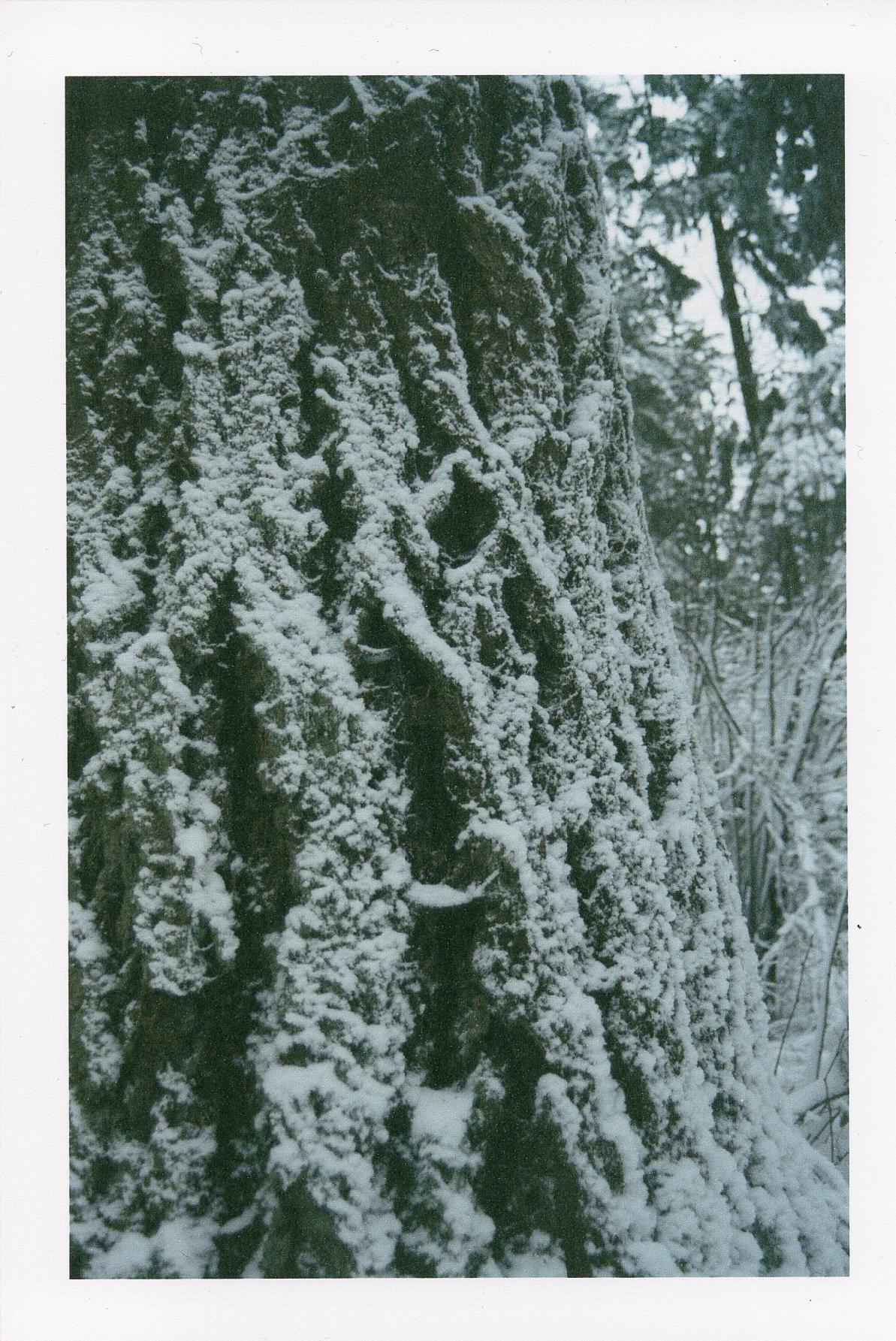 winterfilm-1.jpg