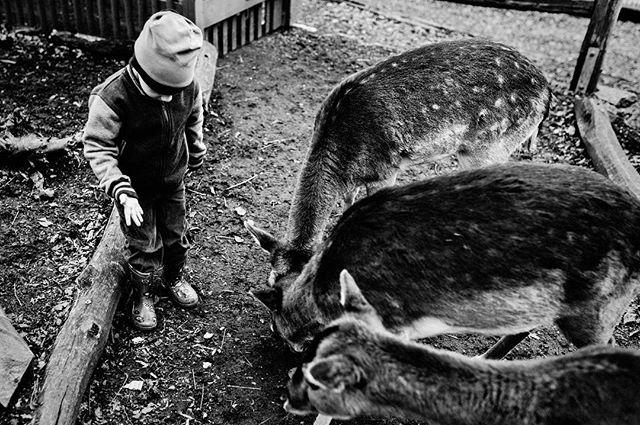 Little animal whisperer 😂  Caption this photo 🦌