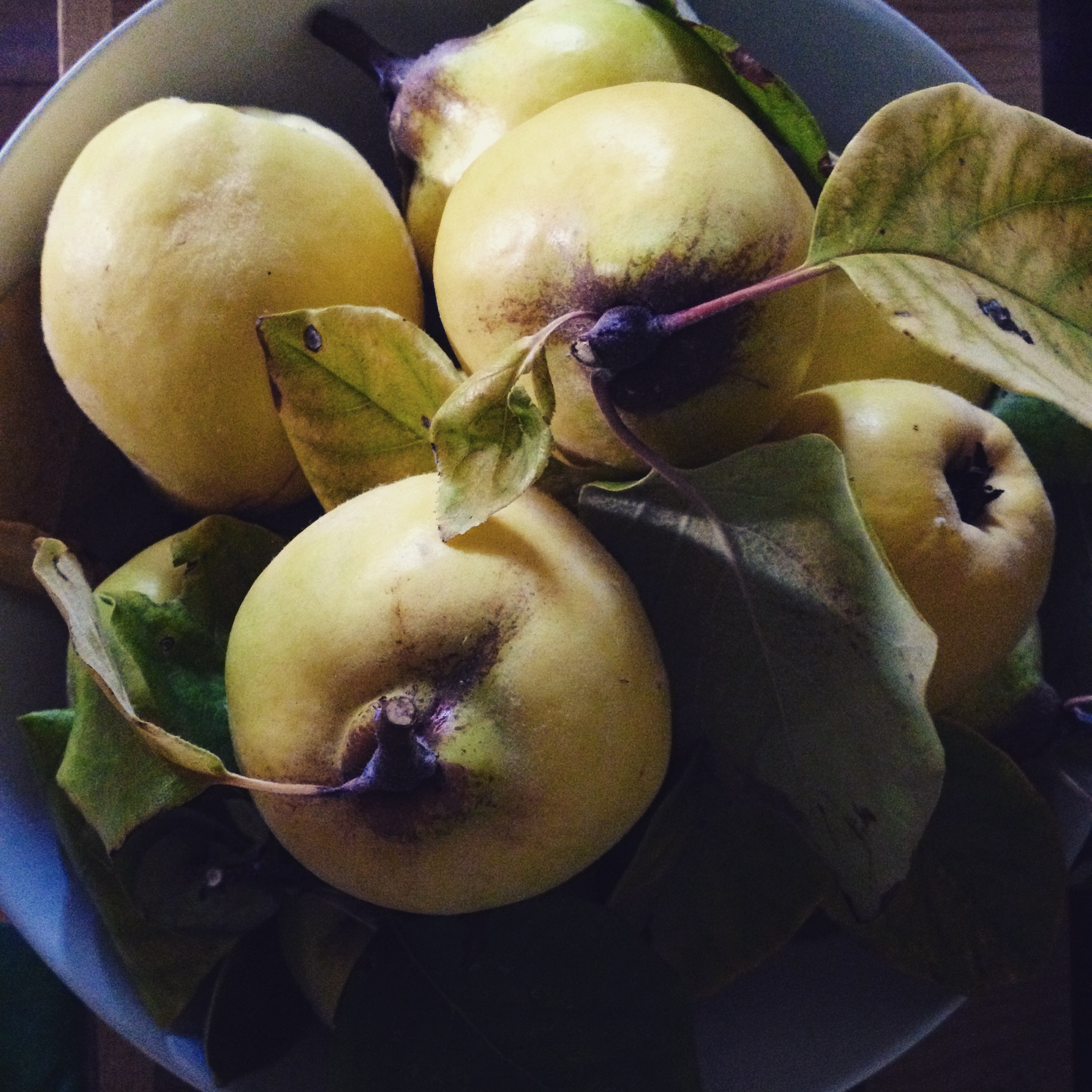 Quince is one of the oldest known fruits, and is a symbol of love.