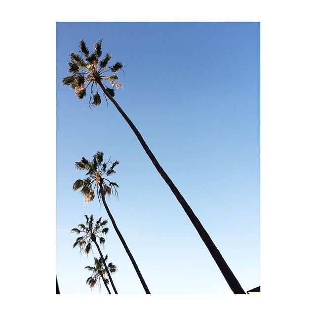 Missing the West Coast.... #instatravel #travelgram #travel #sky #palmtrees #sandiego #california #westcoast #roadtrip #natgeotravel #linear #iphone #iphoneonly #iphoneography #iphonegraphy #cntraveler #nyc_explorers