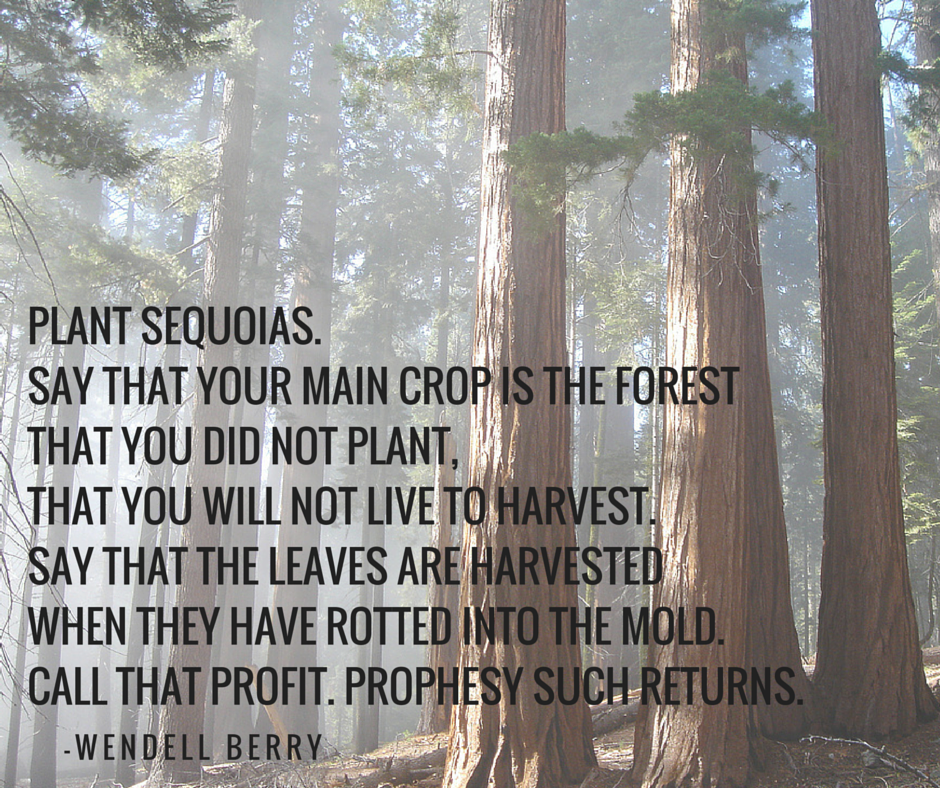 seed_wendellberry_sequoias