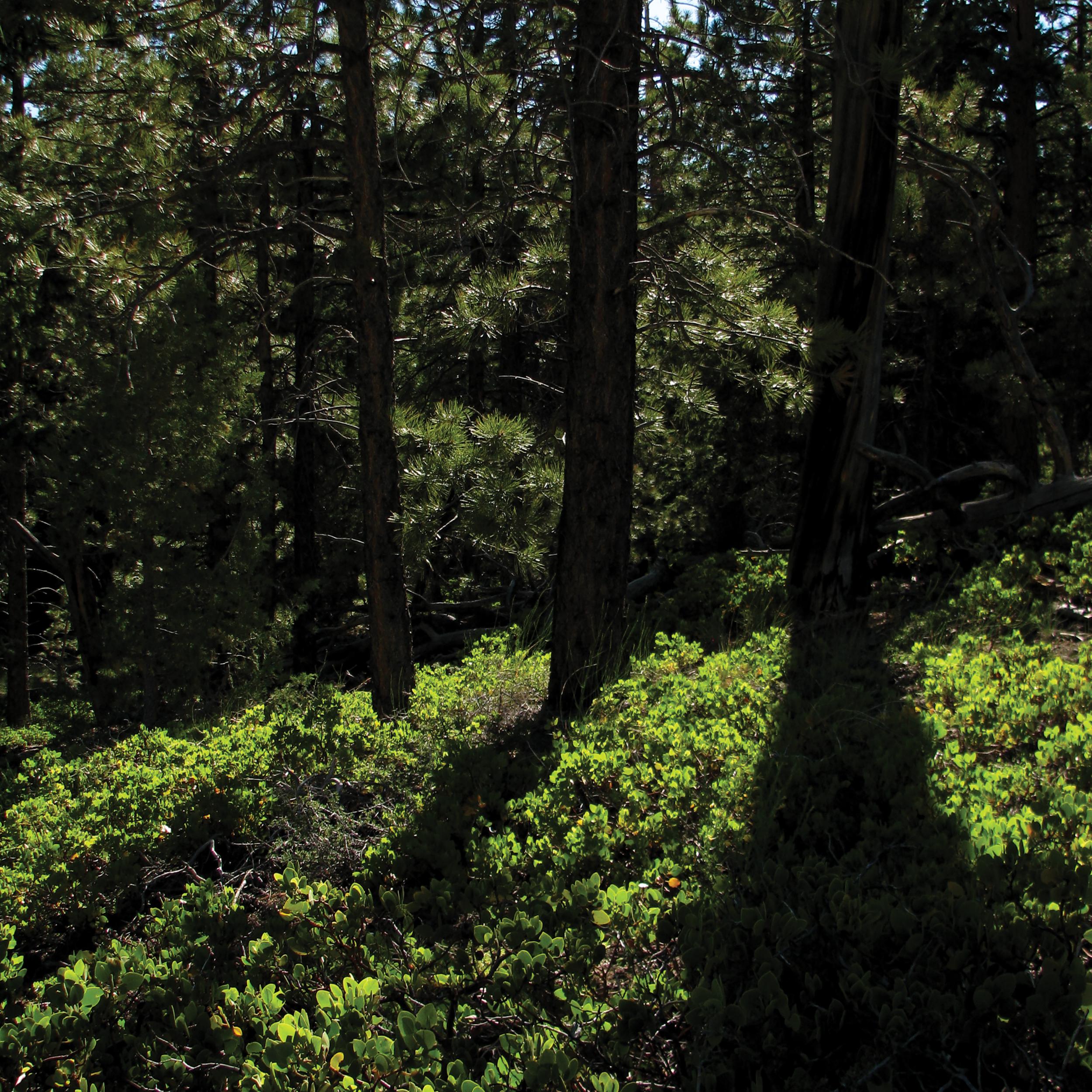 Bryce Trees [RGB 3000 TL018].png