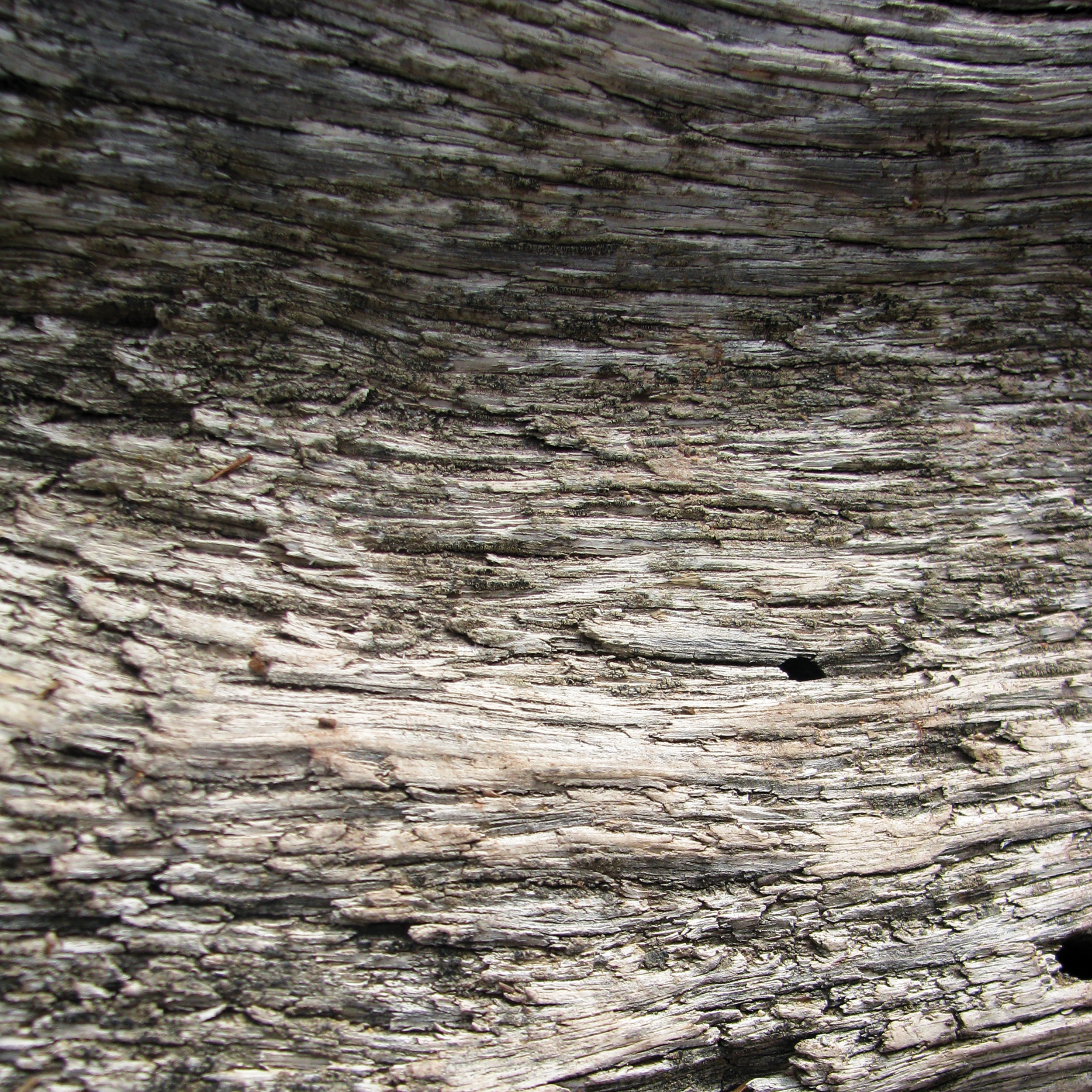 Rocky Mountain Wood 4 [RGB 3000 TL026].png
