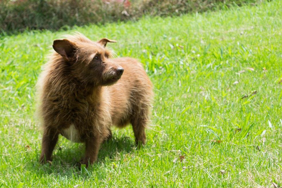 ZooLógica- Animais para adoção (40).jpg